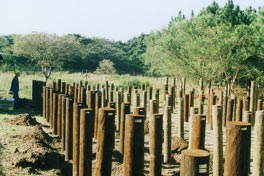 Kenyan trials