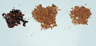 Color changes in wood shavings indicating rot