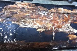 White rot with mycelium